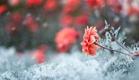 Idéias de arranjos florais de inverno